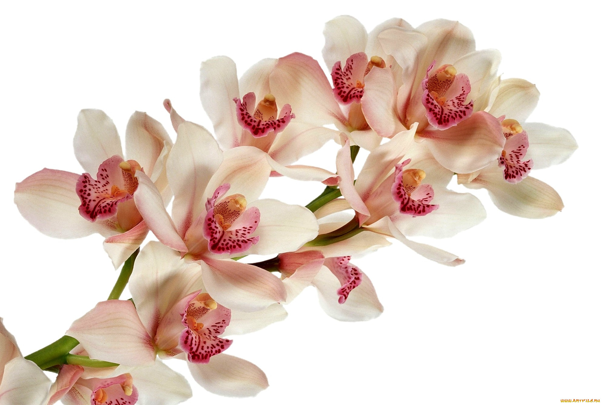 открытка с белыми орхидеями интернете ведутся